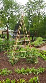 Bean trellis at Keswick Estate | Garden ideas | Pinterest