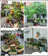 Container Gardening Ideas | gardening and outdoors | Pinterest