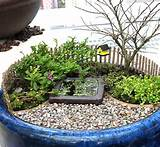 how to plant a miniature garden in a big pot part 1 the mini garden
