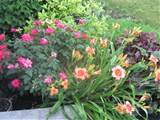 Perennial Small Garden Ideas: 20 Wonderful Perennial Gardens Ideas ...