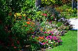 Garden Design - perennial contemporary garden design