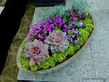 related image with succulent container garden ideas