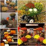 ve been looking up fall decor ideas using chrysanthemums since