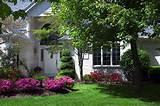 sacramento front yard pink azaleas grass lawn capital landscape web 1
