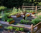 Vegetable Garden | Beautiful Homes Design