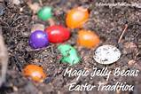 plant the magic jelly beans and watch them grow overnight such a