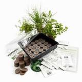 garden stacker planter indoor herbal tea herb garden kit grow lemon