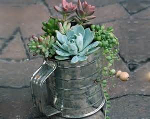 unusual and fun container gardens