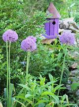 allium | Garden Whimsy & Design Ideas | Pinterest