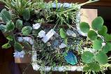 gardening this winter with indoor miniature gardens the mini garden