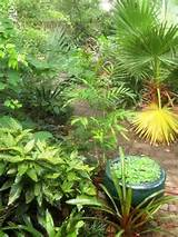 Amazing Tropical Garden Design Ideas | ** DIY SHARE YOUR BEST ** | Pi ...