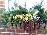 Winter flower boxes | Garden ideas | Pinterest