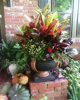 fall container garden ideas pinterest