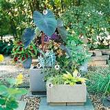 Container gardens for shade. Use some concrete blocks and put old ...