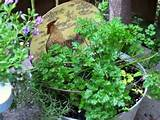 ... gardens everywhere and the perfect vessel for container gardening of
