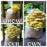 garden log planter log mushrooms find fun art projects to do at
