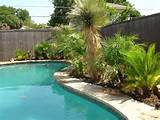 Desert Landscaping Plants With Pool For Modern Style #456 | House ...