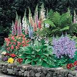 shade perennial flowers helleborus ferns garden plants shade