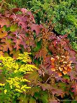 shade garden fall garden ideas pinterest