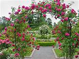 rose garden ideas garden ideas beatiful rose garden ideas 800x604 jpg