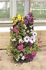 Vertical gardens | Gardening Ideas - Vertical Gardens | Pinterest