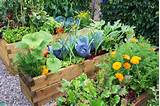 easy vegetable home gardening ideas easy diy and crafts