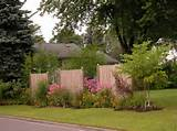 Beautiful Privacy Hedges Gardening Ideas With Wooden Fence
