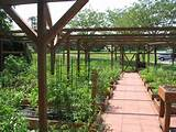 community college garden my dream garden pinterest