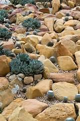 cactus rock garden ideas download landscaping pictures ideas yard