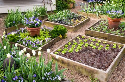 raised bed gardens seeds