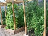 Square Foot Garden Trellis