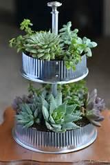 table top succulent indoor garden infarrently creative