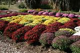 ... design for fall flower gardens design with fall flower garden ideas
