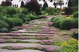 beauty underfoot plants for paths and walkways black thumb