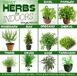 Herb garden | my garden ideas | Pinterest
