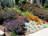 english garden california style traditional landscape los