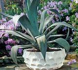inner gardens scalloped low bowl outdoor spaces pinterest