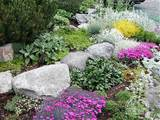 Rock garden ideas on Pinterest | Rock Garden Design, Rocks and ...