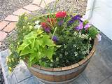 Barrel Planter Ideas http://www.frugalgardening.com/weekly-garden ...