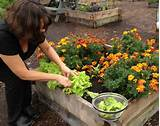 fall gardening tips grow compost of vermont