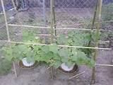 vegetable garden trellis ideas inexpensive cucumber trellis