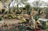 Desert Gardens Nursery - Landscape Ideas