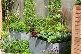 companion container gardening sprig