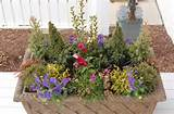 mixture of dwarf conifers from Iseli Nursery , pansies, dianthus ...