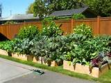 tips for the urban vegetable gardener