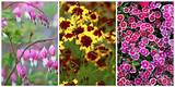 10 Best Perennial Flowers - Ideas for Best Perennials
