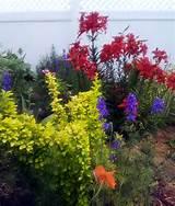 Pretty Perennials | Fine Gardening