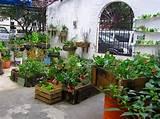 ... > Urban Garden > Urban Container Gardening Ideas Inspirations
