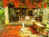 fall leaves decorating gardens and backyards for outdoor events and