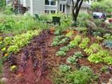 edible front yard | Landscape. Garden edibles | Pinterest